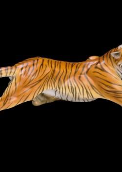 Tigris 05209000 MCD